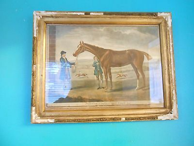 Antique 18Thc Aquatint Racehorse 'firefly', Prop. Of Thos. Foley