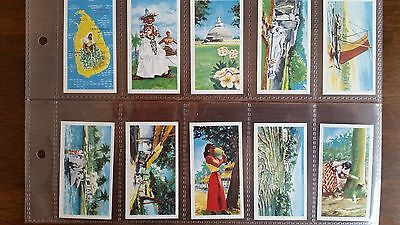 Seymore Mead & Co Tea Cards - THE ISLAND OF CEYLON - Set of 24 in sleeves