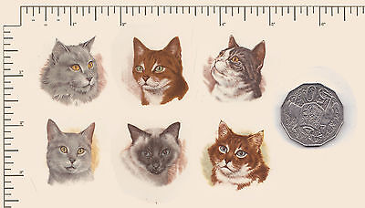 #521.  6 x Waterslide ceramic decals Decoupage. Cat faces Cats Animals Pets