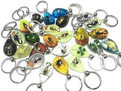 25 keychain real scorpion mixed insect Pressed colorful jewelry