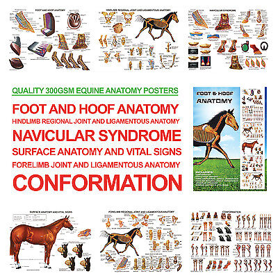 Foot and Hoof Horse Anatomy A3 Posters for Farriers, Farriery, Vets RRP £24.99!
