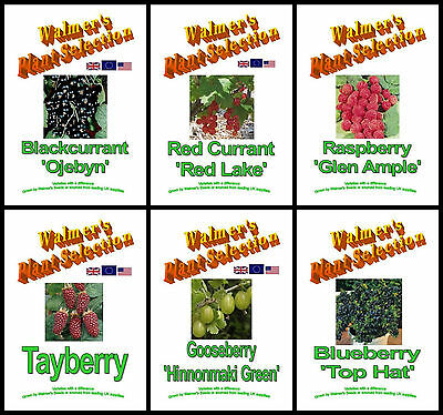 Fruit Bushes - Black & Redcurrant, Raspberry & Tayberry, Gooseberry & Blueberry