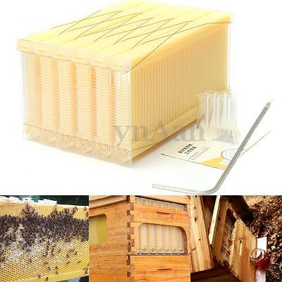 NEW 6pcs Beehive Bee Auto Move Gather Honey Frames For Beekeeping Harvesting