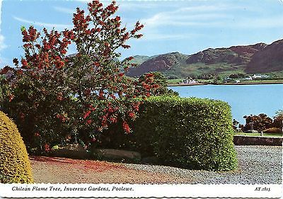 Postcard Chilean Flame Tree Inverewe Gardens Poolewe Scotland Unused
