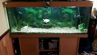 Juwel 450 liter fish tank with loads of extra bits