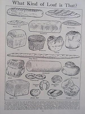 TYPES OF BREAD LOAF old vintage print VIENNA ROLL BATON COTTAGE BAKERY BAKER etc