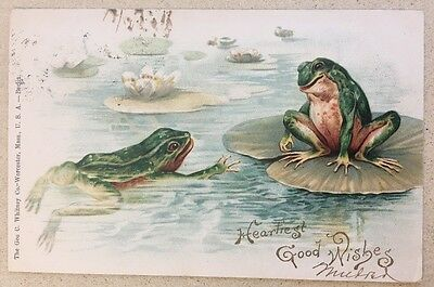 VINTAGE POSTCARD FOGS LILY PAP GEORGE C WHITNEY WORCESTER MASS Printed In Berlin