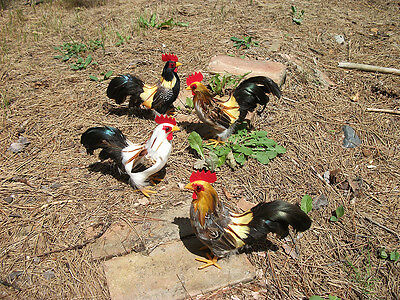 4 ROOSTERS XSmall Realistic CHICKEN Feather Replica Props FREE SHIPPING USA