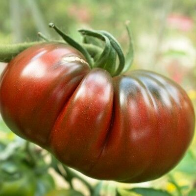Pack Vegetable Seeds Tomato 'Black Russian' Kings Quality Seed