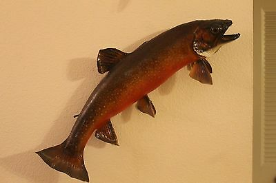 "Large 23"" Brook Trout Wall Mount Fish Taxidermy Double Sided Fishing Decor"