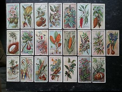 Players - USEFUL PLANTS & FRUITS - Original Cigarette Cards x 22 - 1904