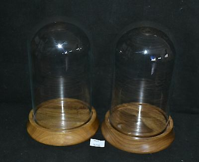ThriftCHI ~ Walnut Base Glass Collectors Domes (2)