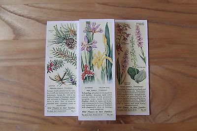 a full set of typhoos wild flowers in their families tea cards