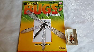 real life bugs and insects issue 19 + lantern bug.