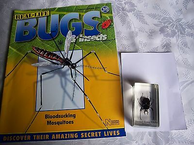 real life bugs and insects issue 38 + horned flower shafer. (b3)