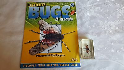 real life bugs and insects issue 20 + giant planthopper.
