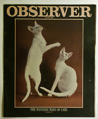 The Rolling Stones Vintage Observer Magazine 20th June 1982:  Rare Article..Etc.