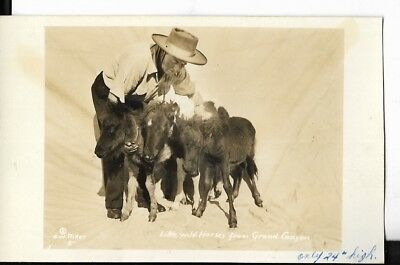 real photo postcard,farmer holding little wild horses from grand canyon