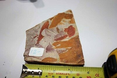 B.J.F.  Super Detailed Fossil Permian Glossopteris Leaf from  Australia, NSW.