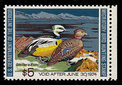 US RW40 Federal Duck Stamp - mint never hinged - very nice 1973 stamp !!