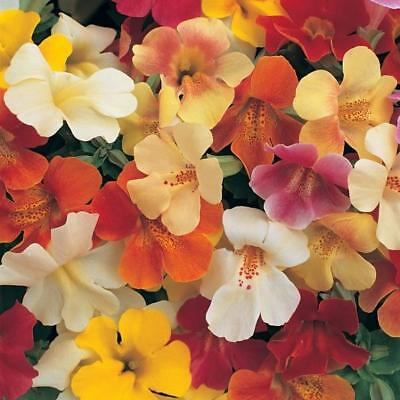 Pack Flower Seed Mimulus Magic Mixed F1 King's Quality Seeds