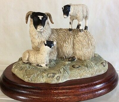 "Border Fine Arts Blackfaced Ewe And Lambs "" King Of The Castle """