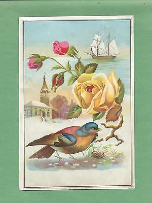 Lovely ROSES, Beautiful BIRD On GORGEOUS LION COFFEE Victorian Trade Card