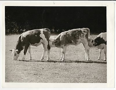 Orig Presse Foto 1970er Hund lustig crazy süß funny witzig selten press photo 7