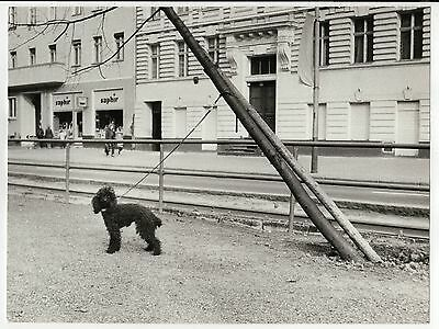 Orig Presse Foto 1970er Hund lustig crazy süß funny witzig selten press photo 15