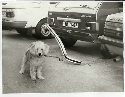 Orig Presse Foto 1970er Hund lustig crazy süß funny witzig selten press photo 3