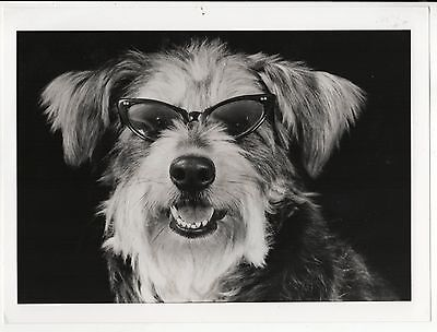 Orig Presse Foto 1980er Hund lustig crazy süß funny witzig selten press photo 11