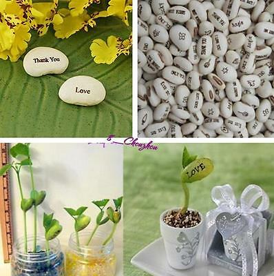 20PCS Magic Bean Plant Seeds With Message Love Words For Love Gifts NEW -8C