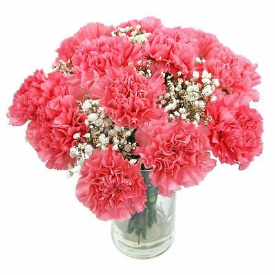 Clare Florist Perfectly Pretty Pink Carnations Fresh Flower Bouquet - UK SELLER