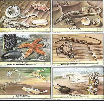 1954,liebig Cards,*insects And Molluscs Of The Shore*,s1592