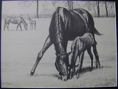 Matted Vintage 1946 Book Print Page C W Anderson Thoroughbred Horse Mare Filly