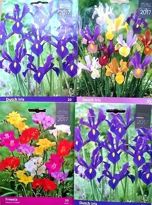 Easy BEAUTIFUL GARDEN FLOWERS BULBS SPRING SUMMER PERENNIAL PLANT QUALITY PACK