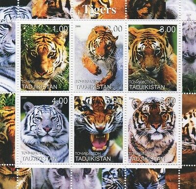 Tigers Wild Cats Animal Kingdom Tadjikistan 2000 Mnh Stamp Sheetlet