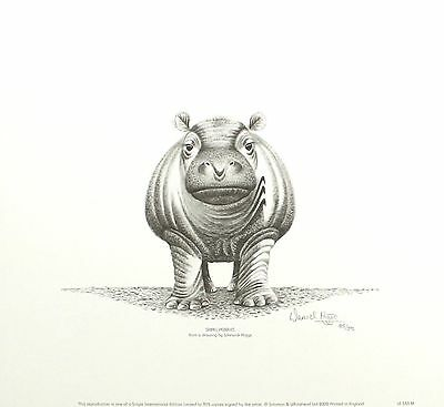 "WARWICK HIGGS ""Small Pebbles"" baby hippo SIGNED LTD ED! SIZE:30cm x 33cm NEW"