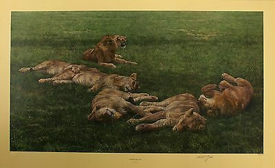 "ANTHONY GIBBS ""A Bachelor's Life"" lions pride LE SIGNED SIZE:57cm x 90cm NEW"