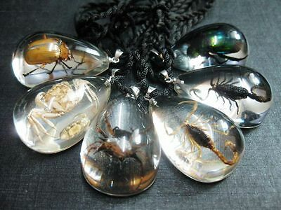 12 Pc lots Real insect beetle In Acrylic Resin scorpion spider Gift Pendant new