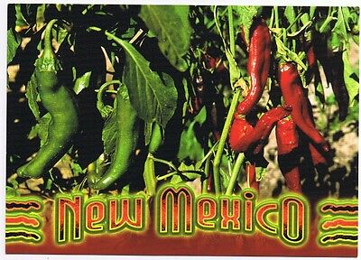 New Mexico - Chile Peppers - Postcard Unused  # 0383