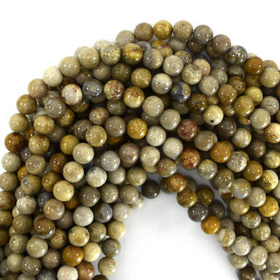 """Fossil Coral Round Beads Gemstone 15.5"""" Strand 4mm 6mm 8mm 10mm 12mm"""