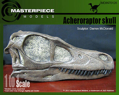 Acheroraptor skull 1 to 1 scale