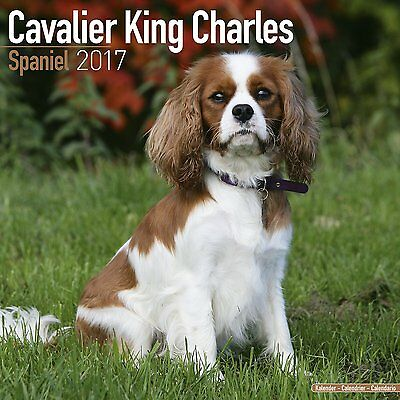 Calendrier 2017 Cavalier king charles