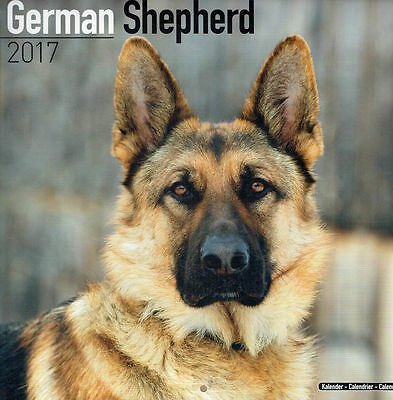 calendrier German Shepherd 2017