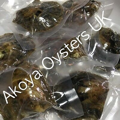 10 x AKOYA OYSTERS : These Oysters contain Pearls !! IN STOCK READY TO DISPATCH