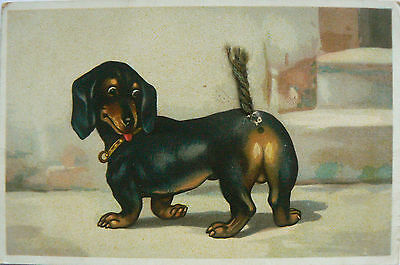 Vintage Card.dogs.just Look At My Tail,it Follows Me Everywhere!unusual Card.