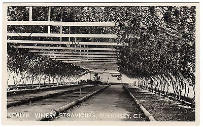 Postcard Newlyn Vinery St. Saviours Guernsey Channel Islands Unused RP