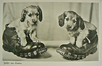 Vintage Card.dogs.greetings From Lindau.dogs In Boots.