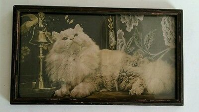 Vintage White Persian Cat Framed Photo Print Sepia